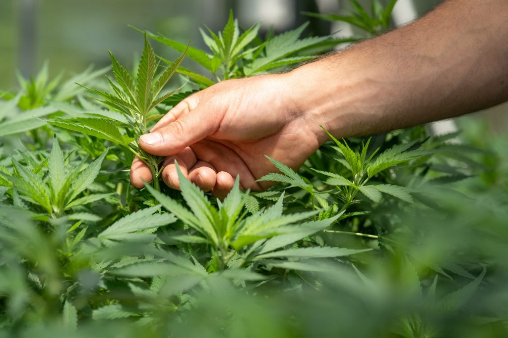 Legalization may actually be on the horizon in North Carolina.